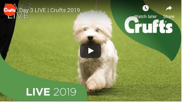 Følg med i Crufts Live kl. 09:30!